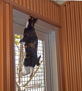 cat climbing fence door