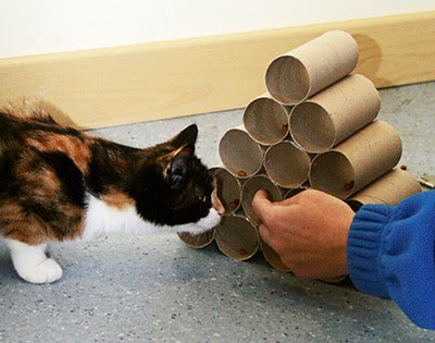 Cat with toilet roll pyramid
