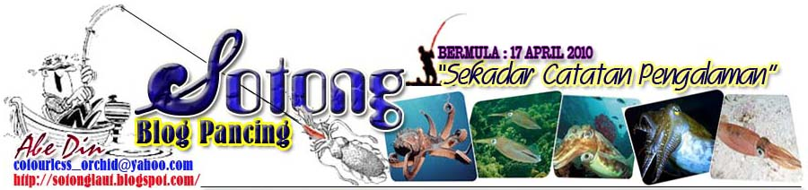 Sotong