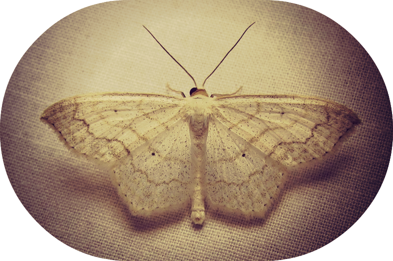the death of the moth Virginia woolf's the death of the moth illustrates the impossible act of a moth trying to pass through a windowpane in order to escape the interiorthe speaker feels sorry for the small creature.
