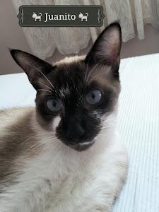 Juanito, Pura Meiguice em forma de gato