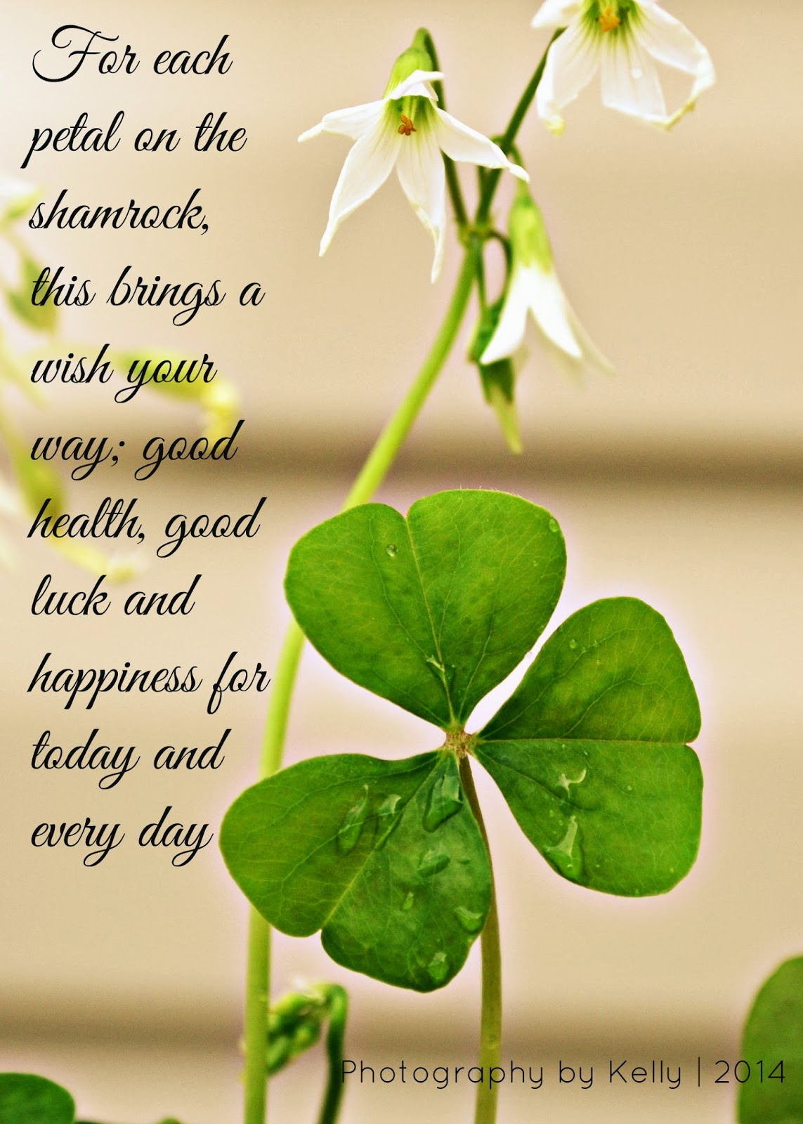 Uncategorized Legend Of The Shamrock living life in pa legend of the shamrock simple beauty this explanation convinced these skeptics and from that day has been revered throughout ireland