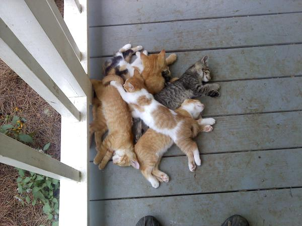 funny cat pictures, kittens pile