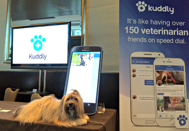Kuddly at BarkWorld with Rocco Havanese