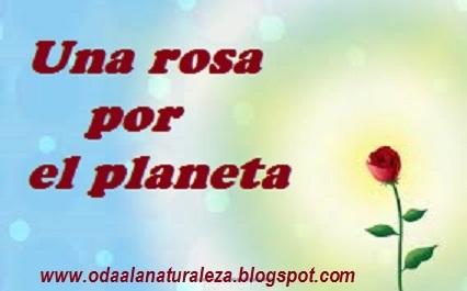 Una-rosa-por-el-planeta.jpg