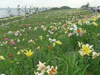 ゆりの花を愛でて長い直線のジグザグゾンがある。