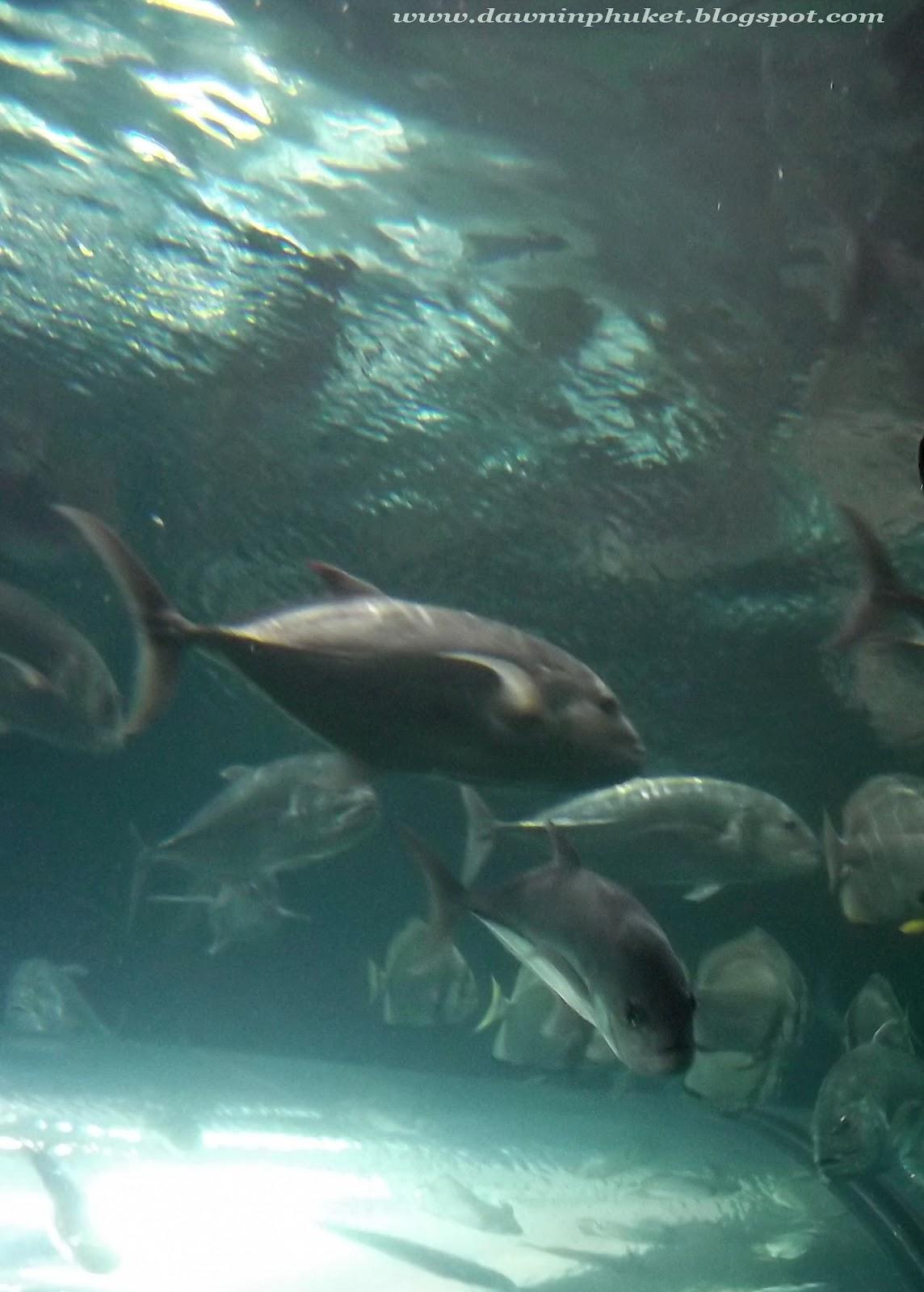 Dawn in Phuket: Phuket Aquarium สถานแสดงพันธุ์สัตว์น้ำ ภูเก็ต