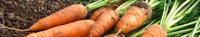 Καρότα υγεία