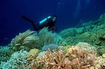 Kabupaten Biak Numfor Andalkan Objek Ekowisata di Taman Laut Kepulauan Padaido