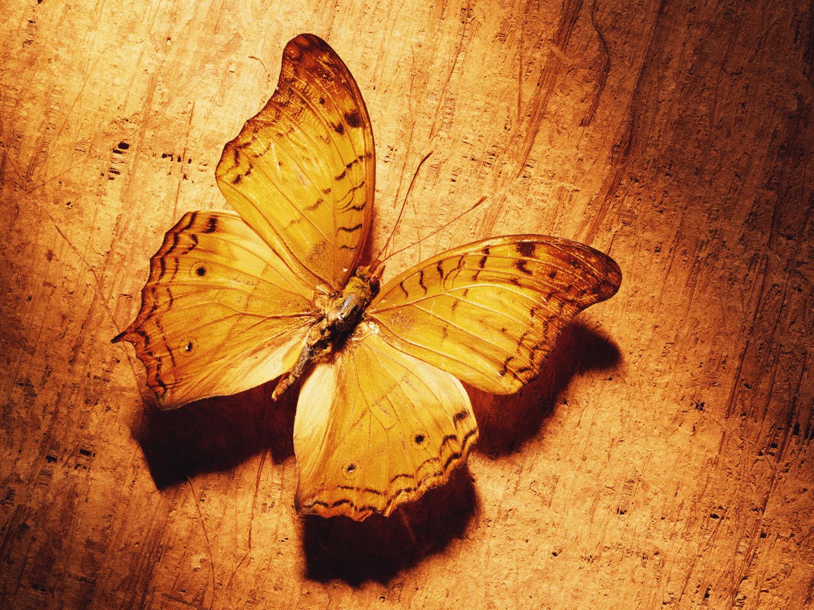 http://2.bp.blogspot.com/-KmWd99RKztg/UHr3shH6qZI/AAAAAAAAIGk/DzosIH3ujBQ/s1600/butterfly3.jpg