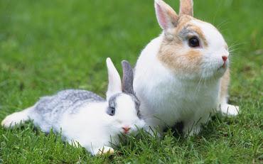 #8 Rabbit Wallpaper