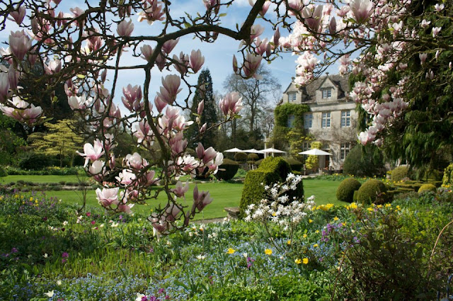 Blossoms, Barnsley House, image via the facebook page, as seen on linenandlavender.net, http://www.linenandlavender.net/2013/05/the-english-garden.html