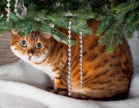 Kot pod choinkę