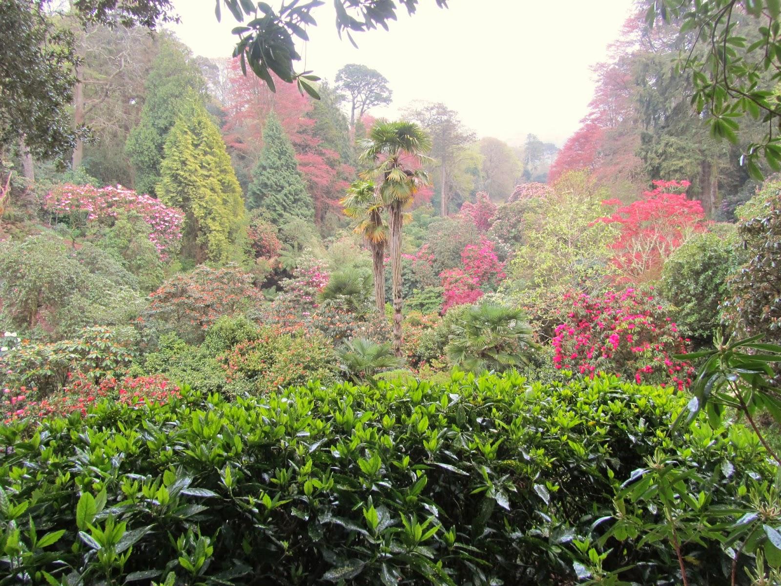 Detritus Of Empire Trebah A Real Victory Garden