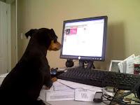 alt perro viendo computadora