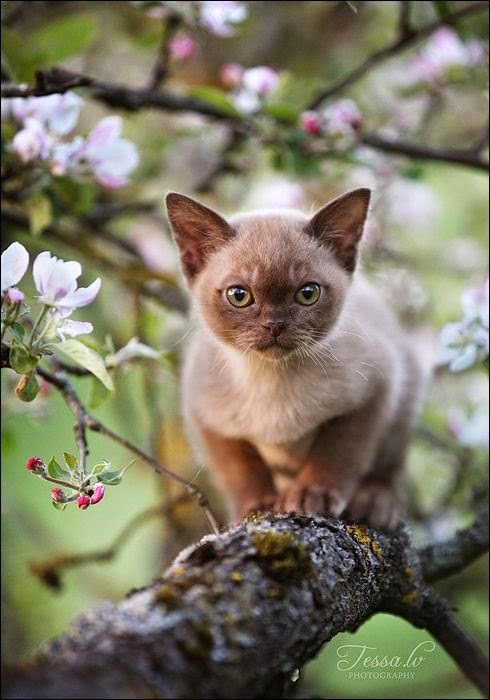 Top 5 Most IntellIgent Cat Breeds