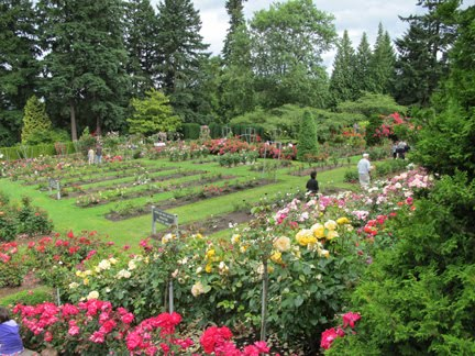 RV for 5: International Rose Test Garden