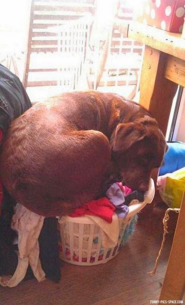 perro durmiendo en ropa sucia