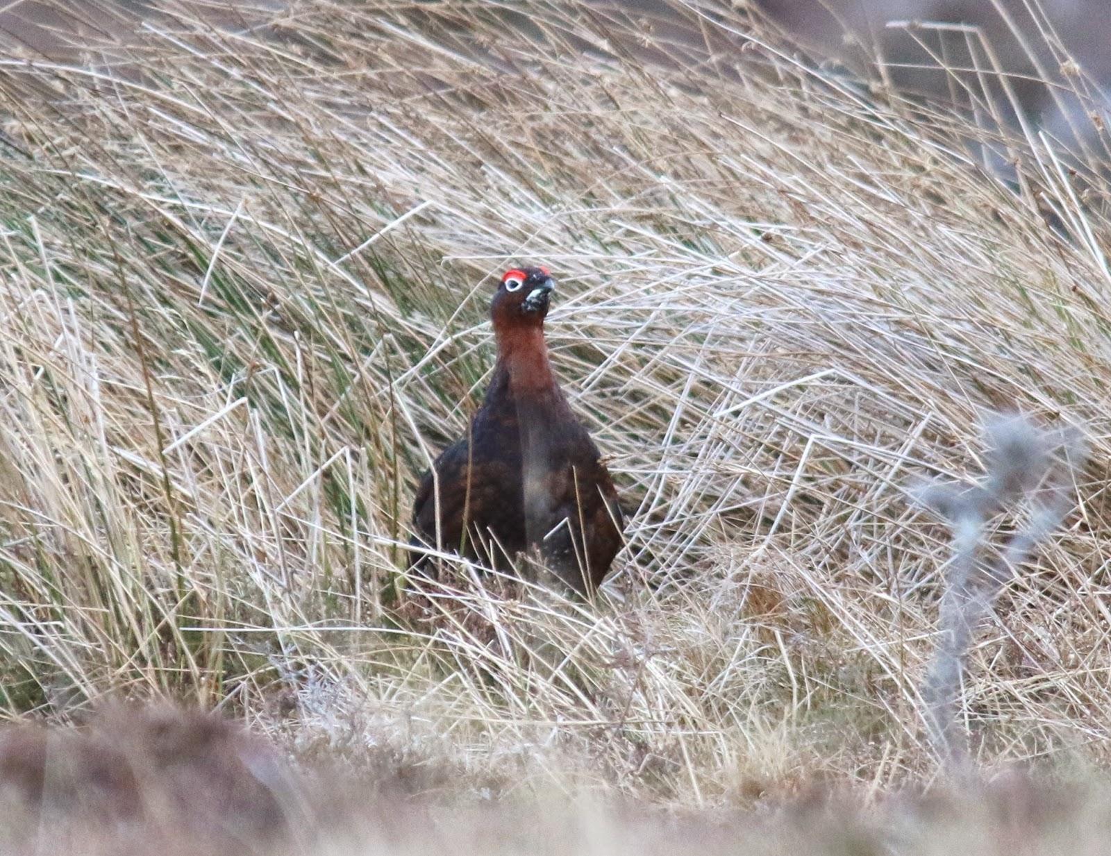 Moysie\'s Birding Blog: Scotland Trip - Day 1