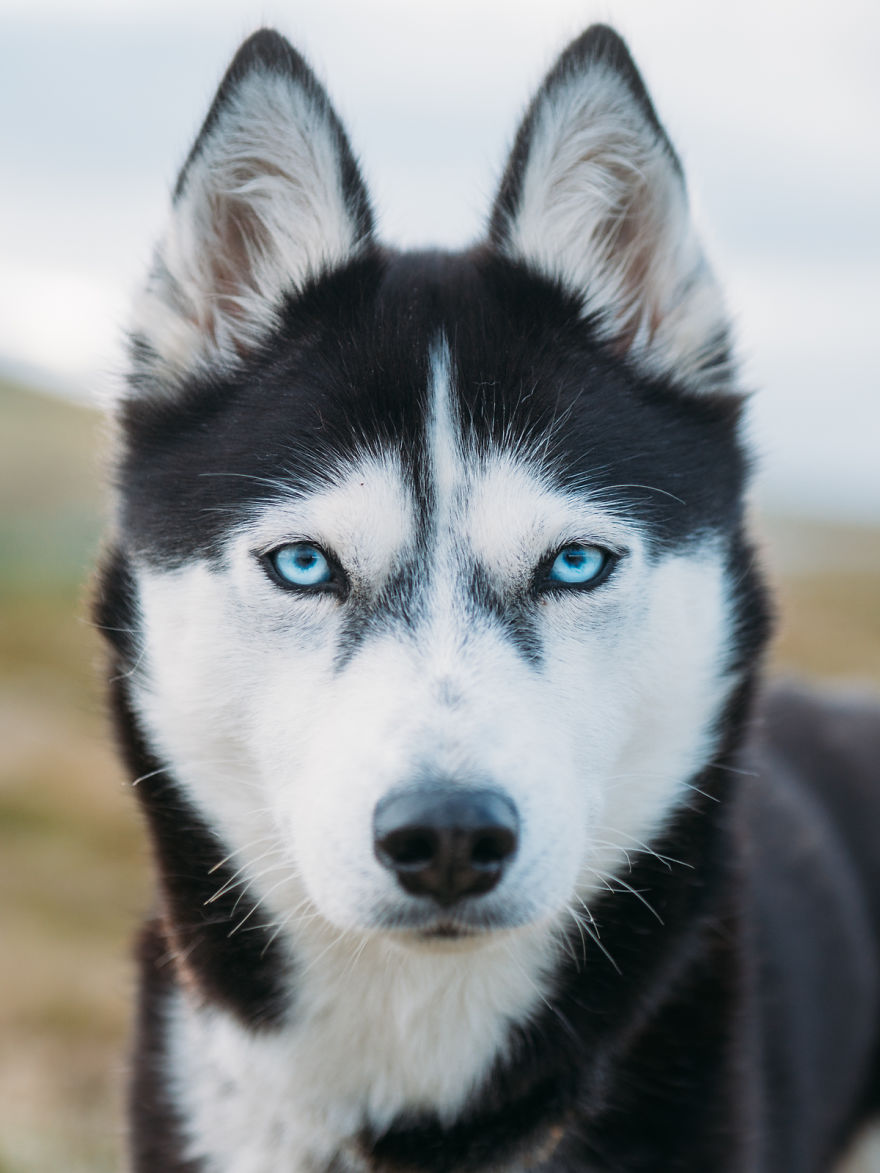 I Quit My Job To Go On Adventures With My Husky Snow Addiction - Guy quits his job to go on epic adventures with his husky