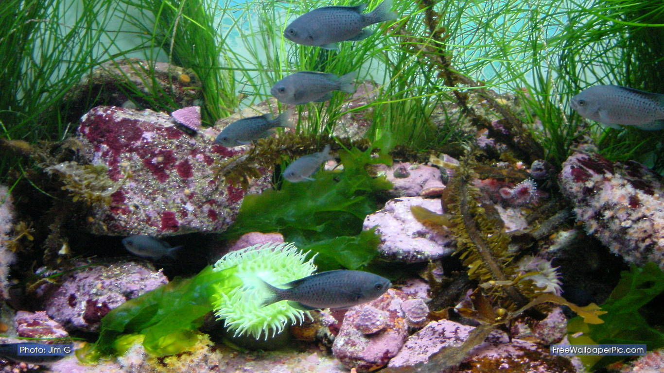 Fish Aquarium In Coimbatore - Fish tank gif