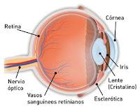 Ojo, oftalmologos