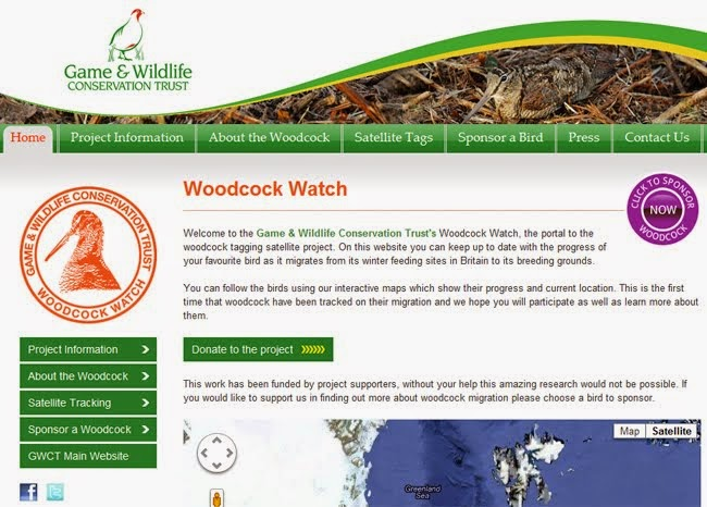 Woodcock Watch