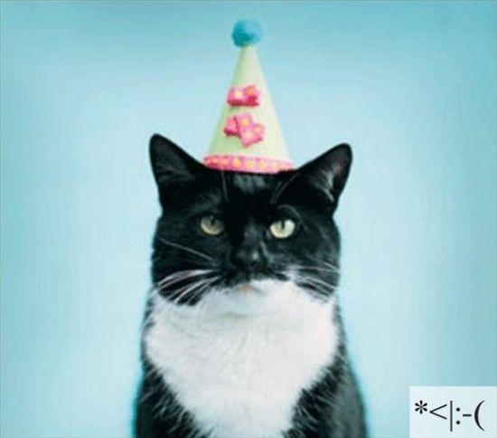 23 Emoticon Lucu Berdasarkan Wajah Kucing