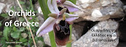 Orchids of Greece