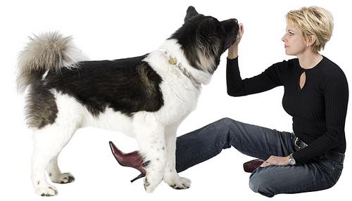Do Good Training Sunshine Coast Dog