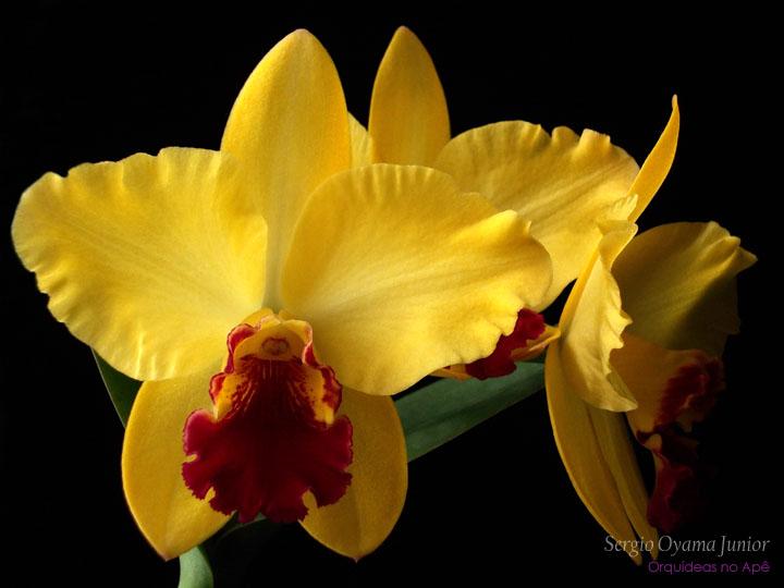 Resultado de imagem para orquideas fotos