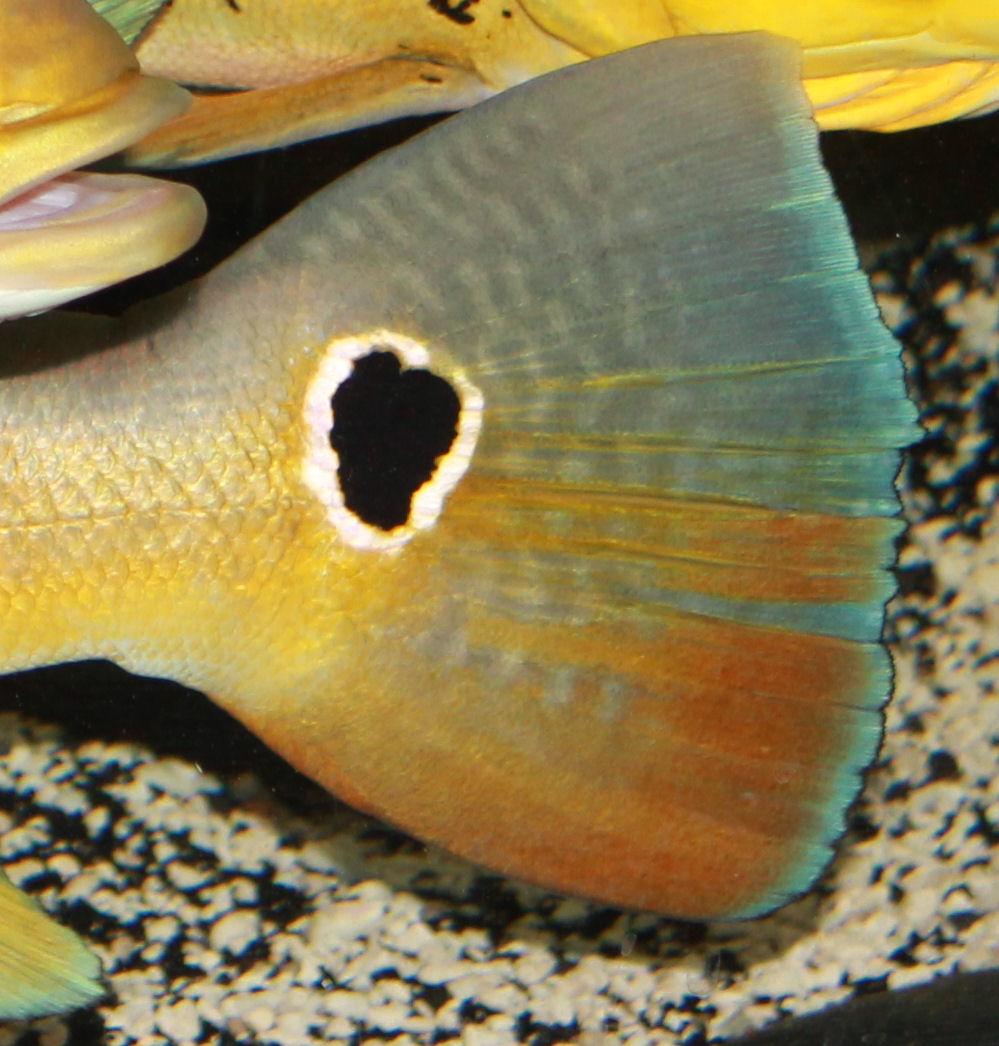 fugupuff: Rare fish pet peeves