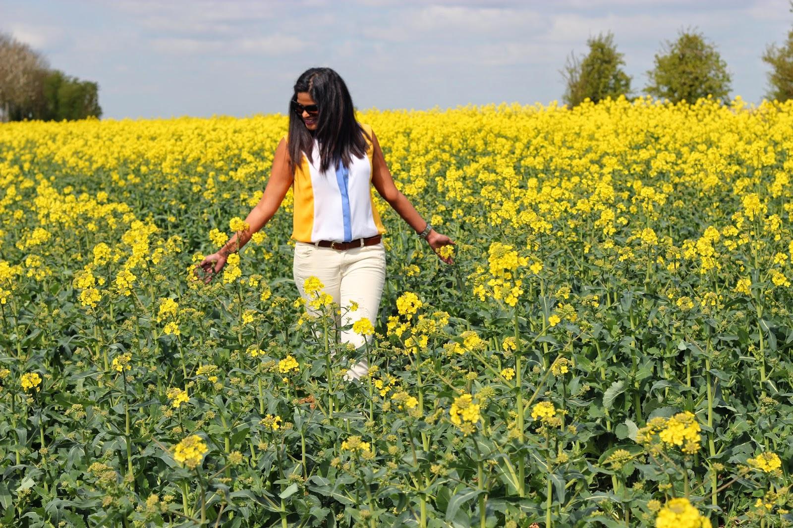 Canola fields London