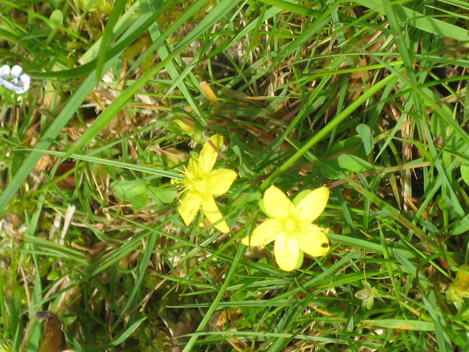 Where Beechmast Falls Wild Flowers Of The Fields