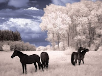 Black beauty horse Puzzle