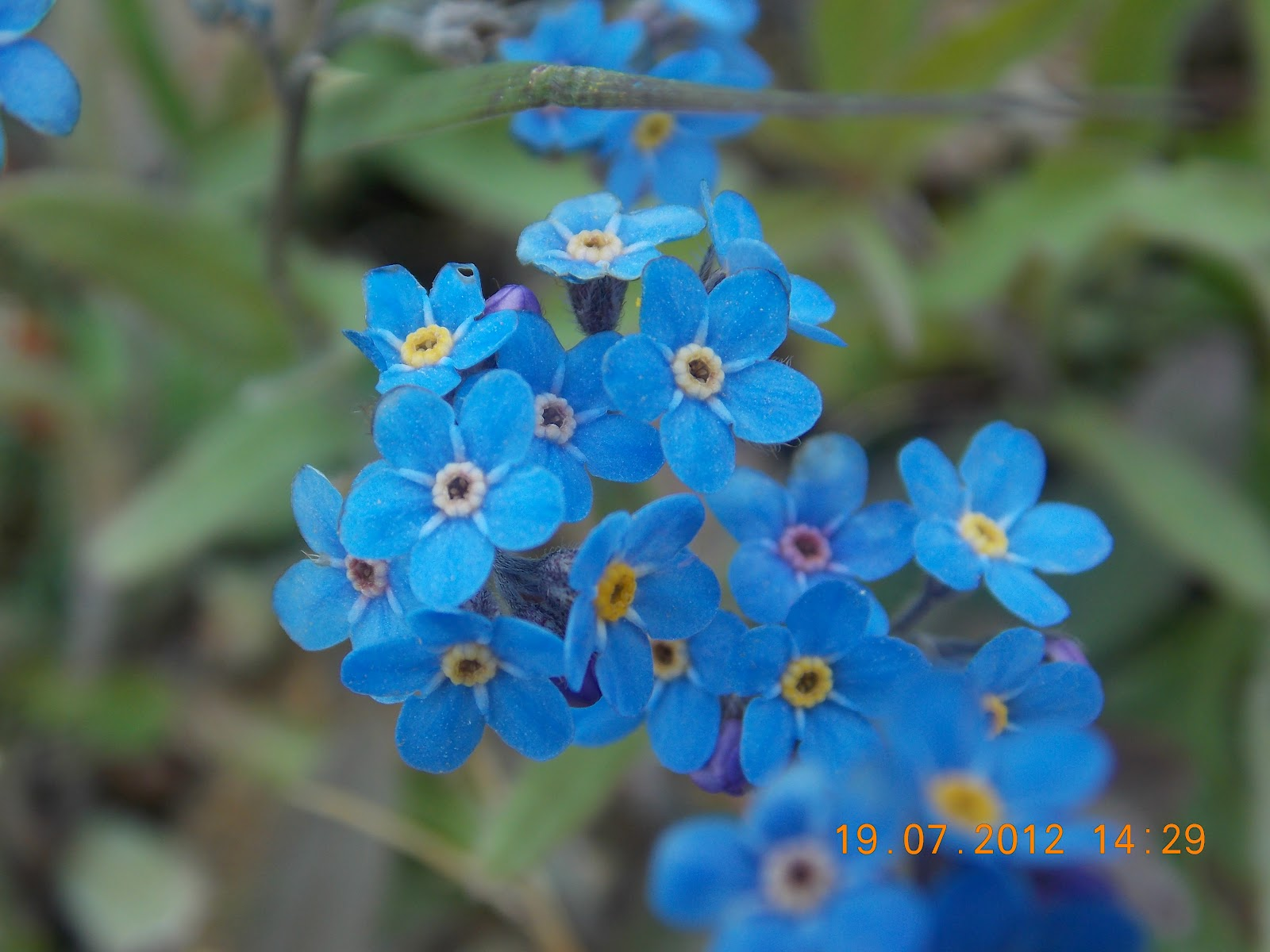 History on the Move A Whole New World Alaska s Wildflowers
