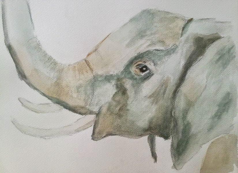 elefante con tecnicas al agua