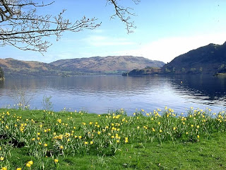 Daffodils by the lakeside - Lake District