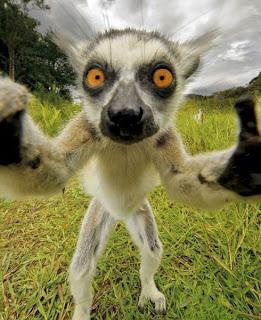 Συλλογή με αστείες εικόνες από ζώα!