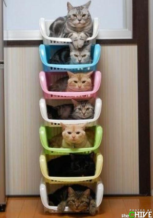 geng giler kucing