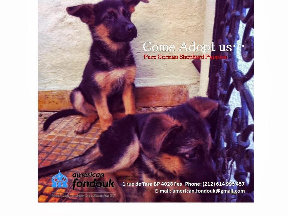 Medina Dog Adoption