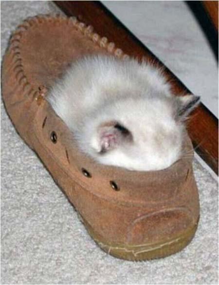 Koleksi gambar kucing sedang tidur yang comel #part 2