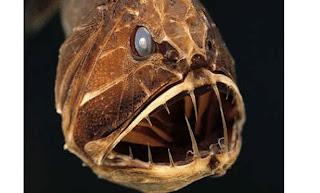 اكثر مخلوقات عالم البحار رعباً 2.jpg