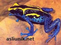 Binatang Cantik Paling Beracun dan Mematikan di Dunia
