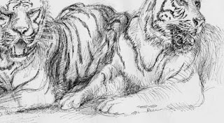 tiger, art, painting, schoenbrunn, zoo, cats, jungle, raubkatzen, zeichnung, wildlife, jungle