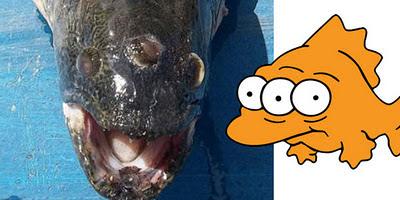 Hasil gambar untuk ikan bermata tiga di argentina