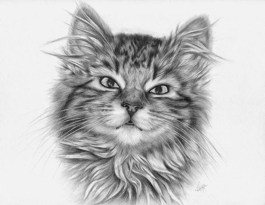 Detailed Clip Art Drawings Of Cats Black And White