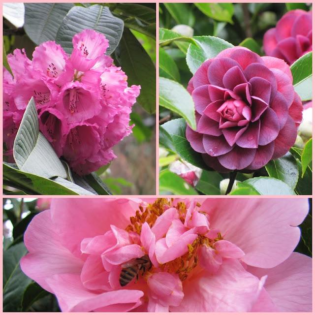 hollard-gardens-taranaki