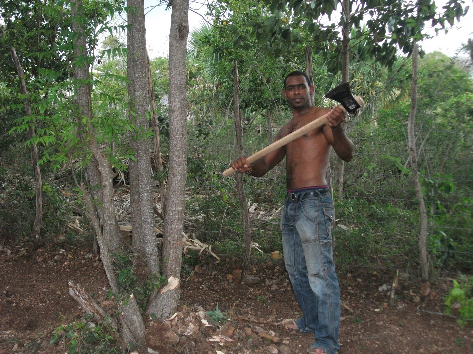Cutting A Tree : What about your saucepans neem trees and good news