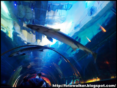 海洋公園水族館